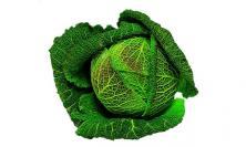 Chou vert frisé de Milan  © Larousse - Stylisme : I. Dreyfus
