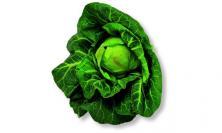 Chou vert pointu (type cabus)  © Larousse