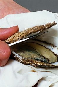 Ouvrir une huître