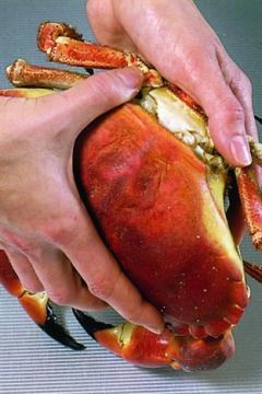 Ouvrir et décortiquer un crabe cuit
